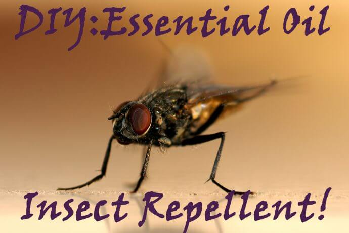 Essential Oil insect repellent