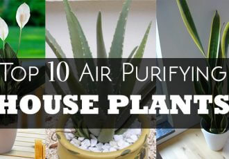 air purifying house plants indoor detox clean air