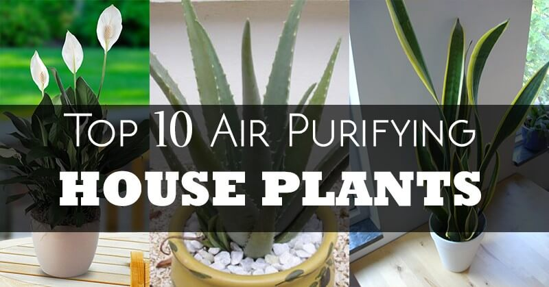 28 top 10 air purifying indoor air purifying indoor for Top 10 living room plants