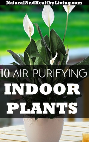 air purifying indoor house plants