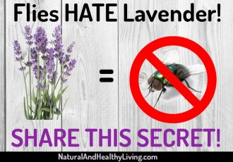flies hate lavender